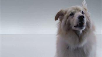 The Shelter Pet Project TV Spot, 'Meet Kuma, Amazing Shelter Pet!'
