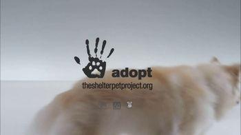 The Shelter Pet Project TV Spot, 'Meet Kuma, Amazing Shelter Pet!' - Thumbnail 6