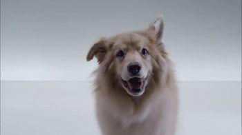 The Shelter Pet Project TV Spot, 'Meet Kuma, Amazing Shelter Pet!' - Thumbnail 1