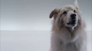 The Shelter Pet Project TV Spot, 'Meet Kuma, Amazing Shelter Pet!'
