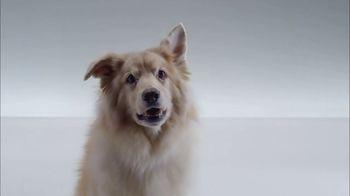 The Shelter Pet Project TV Spot, 'Meet Kuma, Amazing Shelter Pet!' - Thumbnail 5