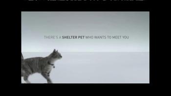 The Shelter Pet Project TV Spot, 'Meet Maui, Amazing Shelter Pet!' - Thumbnail 7