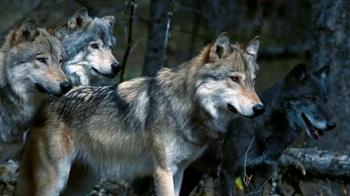 Blue Buffalo Wilderness TV Spot, 'Wolf' - Thumbnail 2
