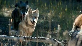 Blue Buffalo Wilderness TV Spot, 'Wolf' - Thumbnail 4