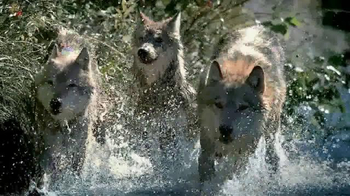 Blue Buffalo Wilderness TV Spot, 'Wolf' - Thumbnail 5