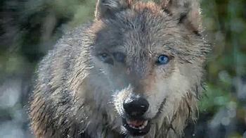 Blue Buffalo Wilderness TV Spot, 'Wolf' - Thumbnail 7