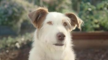 Kibbles 'n Bits TV Spot, 'Eye on the Ball' - Thumbnail 4