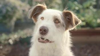 Kibbles 'n Bits TV Spot, 'Eye on the Ball' - Thumbnail 5