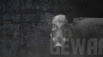 Hornady Full Boar TV Spot, 'Tough' - Thumbnail 1
