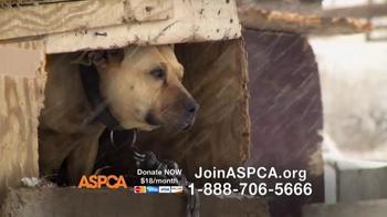 ASPCA TV Spot, 'No One' - Thumbnail 9