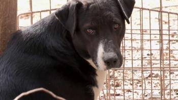 ASPCA TV Spot, 'No One' - Thumbnail 1