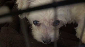 ASPCA TV Spot, 'No One' - Thumbnail 3