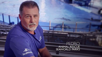 SeaWorld TV Spot, 'Facts about SeaWorld's Killer Whales' - Thumbnail 2