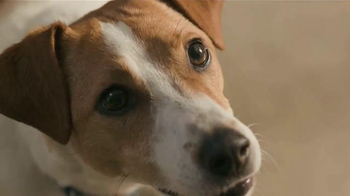 Purina Beneful Chopped Blends TV Spot, 'Yes, I Want to Eat!' - Thumbnail 2