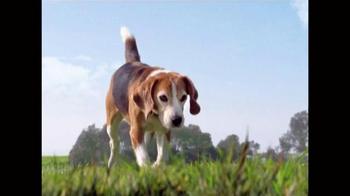 Frontline Plus for Dogs TV Spot, 'Flea Fighter' - Thumbnail 1