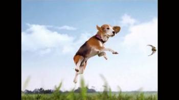 Frontline Plus for Dogs TV Spot, 'Flea Fighter' - Thumbnail 2