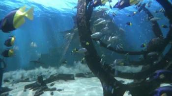 Atlantis TV Spot, '$250 Airfare Credit and Dolphin Interaction' - Thumbnail 2