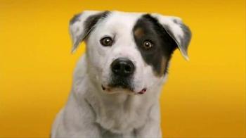 Pedigree Dentastix TV Spot, 'Give Your Dog a Bright Smile' - Thumbnail 1