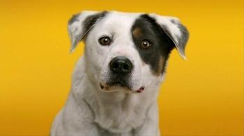 Pedigree Dentastix TV Spot, 'Give Your Dog a Bright Smile' - Thumbnail 2