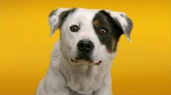 Pedigree Dentastix TV Spot, 'Give Your Dog a Bright Smile' - Thumbnail 3