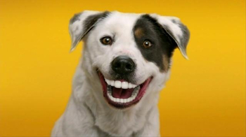 Pedigree Dentastix TV Spot, 'Give Your Dog a Bright Smile'