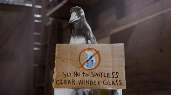 Windex TV Spot, 'Say No to Clear Glass' - Thumbnail 9