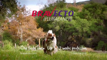 Bravecto TV Spot, \'Meet Jack the Bravecto Dog\'