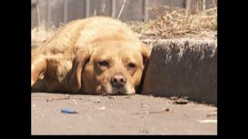 ASPCA TV Spot For Abused Pets - Thumbnail 1