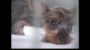 ASPCA TV Spot For Abused Pets - Thumbnail 3