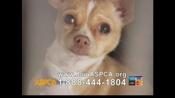ASPCA TV Spot For Abused Pets
