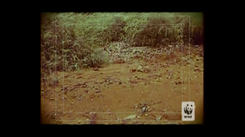 World Wildlife Fund TV Spot 'Poachers' - Thumbnail 1