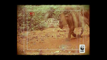 World Wildlife Fund TV Spot 'Poachers' - Thumbnail 2