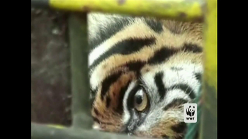 World Wildlife Fund TV Spot 'Poachers' - Thumbnail 3
