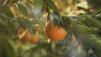 Simply Orange TV Spot For Simply Orange - Thumbnail 3