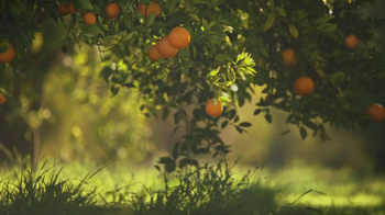 Simply Orange TV Spot For Simply Orange - Thumbnail 5