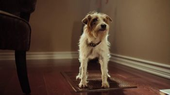 XFINITY Home TV Spot, 'Beware of Dog'