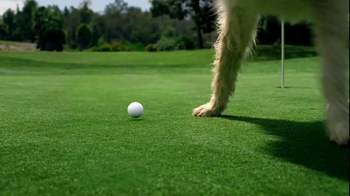 Travelers Insurance TV Spot, 'Golf With Dog' Song by Ella Fitzgerald - Thumbnail 8