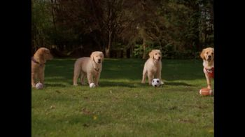 The Shelter Pet Project TV Spot, 'Adopt'