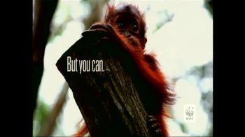 World Wildlife Fund TV Spot Featuring Lang Lang