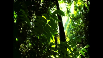 World Wildlife Fund TV Spot Featuring Lang Lang - Thumbnail 3
