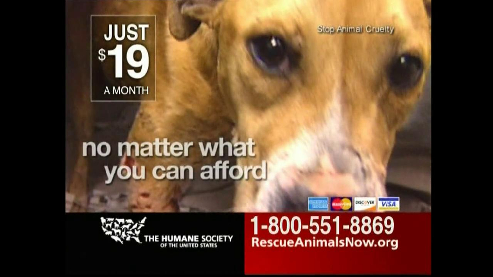 humane society tv commercial for rescue animals now ispot tv