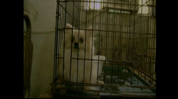 Humane Society TV Spot For Rescue Animals Now - Thumbnail 2