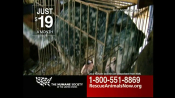 Humane Society TV Spot For Rescue Animals Now - Thumbnail 7
