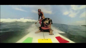 PETCO TV Spot, 'Balance' - 3221 commercial airings