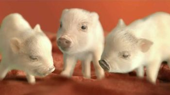 The Home Depot Carpet TV Spot, 'Little Piggies'