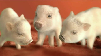 The Home Depot Carpet TV Spot, 'Little Piggies' - 3816 commercial airings