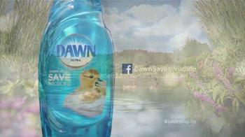 Dawn Ultra TV Spot, 'Rescate de la Vida Silvestre' [Spanish] - Thumbnail 9