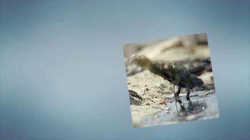Dawn Ultra TV Spot, 'Rescate de la Vida Silvestre' [Spanish] - Thumbnail 1