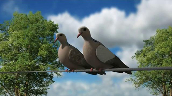 Mojo Outdoors TV Spot, 'Pigeons' - Thumbnail 1
