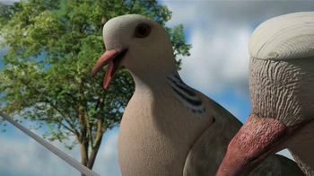 Mojo Outdoors TV Spot, 'Pigeons' - 168 commercial airings